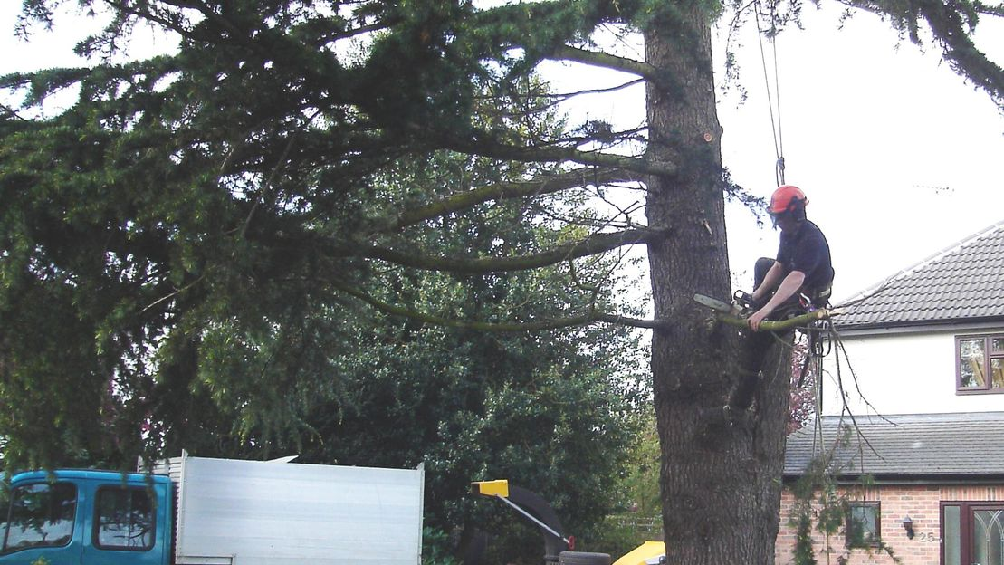 One of our professionals working on a tree