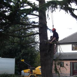 One of our team making their way safely up a tree