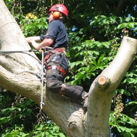 One of our team cutting a large section of tree trunk